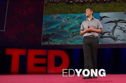ed yong ted talk cultural parasites